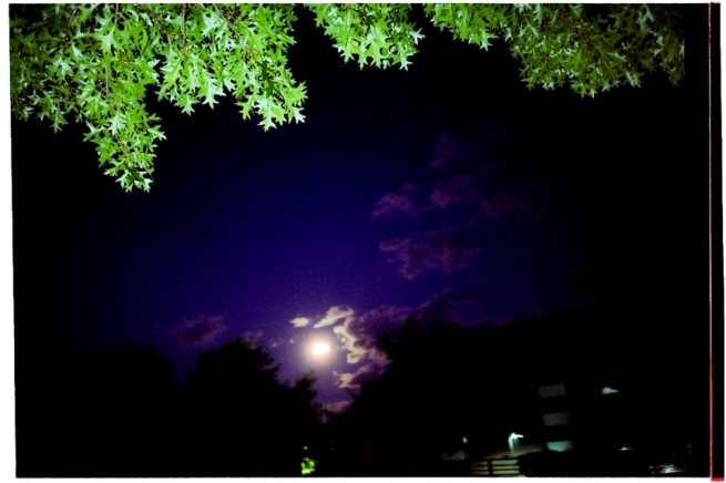 burl_moon