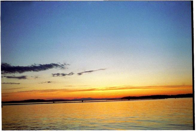 burl_sunset