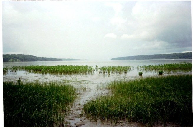 eagleisland