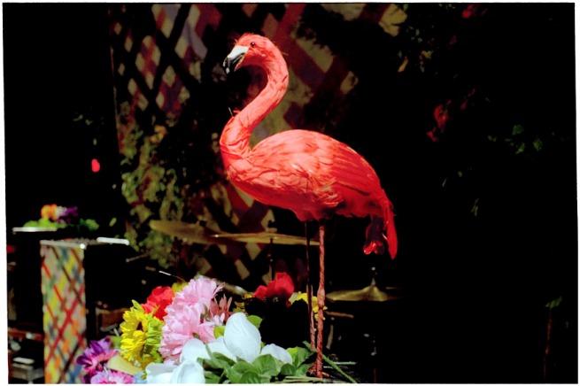 leica_flamingo