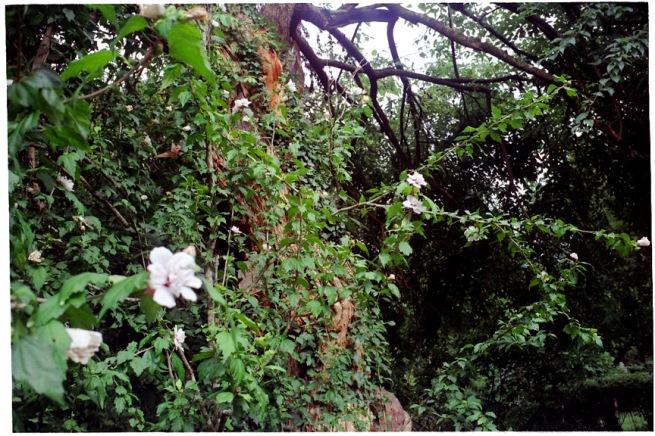 oak_flower