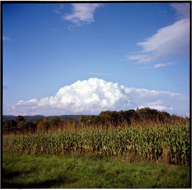 vt_corn